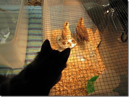 I wonder what chicken tastes like?